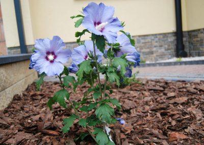 flowerpower-aranzacja-ogrodow-04-22