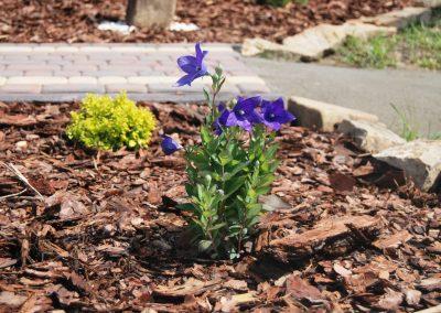 flowerpower-aranzacja-ogrodow-05-11