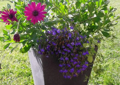 flowerpower-donice-04