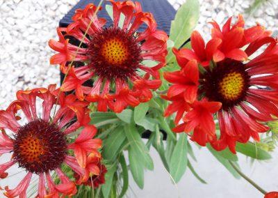 flowerpower-donice-09