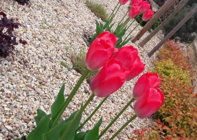 flowerpower-pielegnacja-ogrodu-01-02