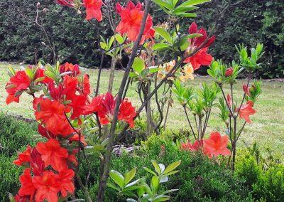 flowerpower-aranzacja-ogrodow-19-06.jpg
