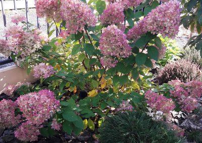 flowerpower-aranzacja-ogrodow-19-09.jpg