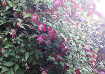 flowerpower-aranzacja-ogrodow-19-16.jpg