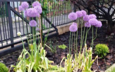 Aranżacja ogrodu 19