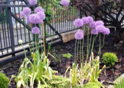 flowerpower-aranzacja-ogrodow-19-20.jpg