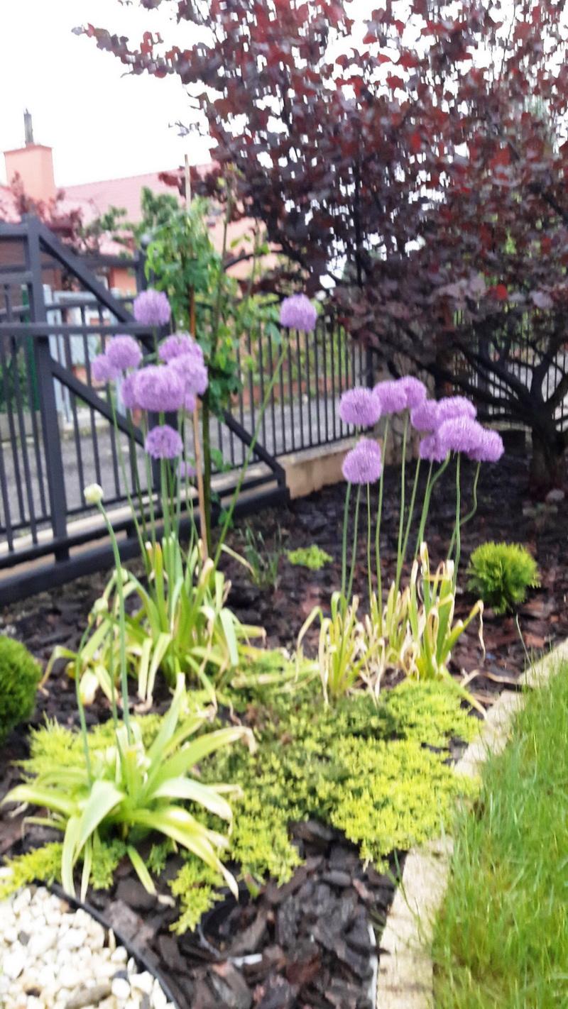 85a8ad4e6d Aranżacja ogrodu 19 - Flower Power - magiczne ogrody