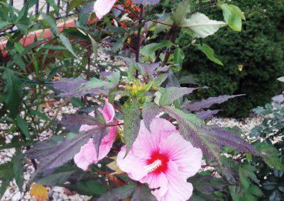 flowerpower-aranzacja-ogrodow-21-05.jpg