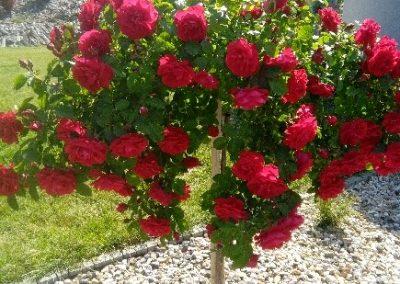 flowerpower-aranzacja-ogrodow-23-01.jpg