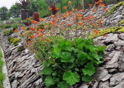 flowerpower-aranzacja-ogrodow-23-06.jpg