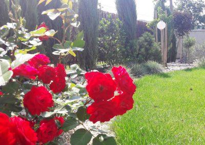 flowerpower-aranzacja-ogrodow-32-10.jpg