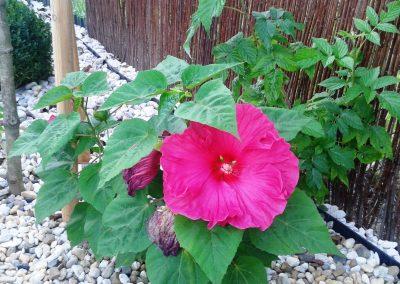 flowerpower-aranzacja-ogrodow-32-22.jpg