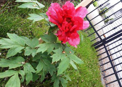 flowerpower-aranzacja-ogrodow-32-25.jpg