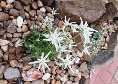 flowerpower-aranzacja-ogrodow-35-02.jpg