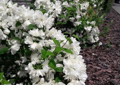 flowerpower-aranzacja-ogrodow-38-44