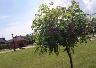 flowerpower-aranzacja-ogrodow-38-50