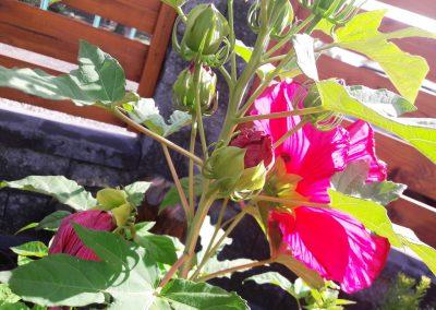 flowerpower-aranzacja-ogrodow-39-04