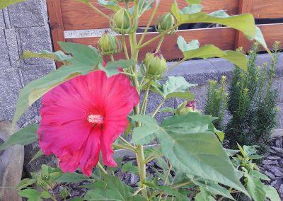 flowerpower-aranzacja-ogrodow-39-07