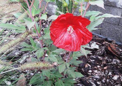 flowerpower-aranzacja-ogrodow-39-15