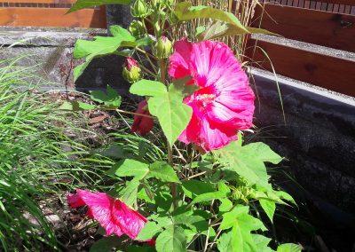 flowerpower-aranzacja-ogrodow-39-16