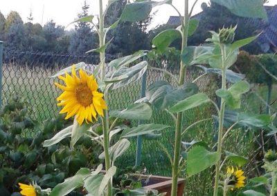 flowerpower-aranzacja-ogrodow-39-24